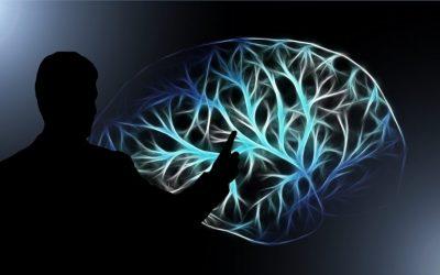brain-3141247_1920-900x487